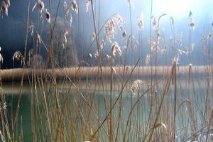 Sarine - Lac de Pérolles